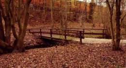 Photo-courtesy-of-mdemon-22old-wooden-bridge22-via-Flickr-260x140